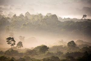 Дъждовна гора